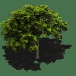 Amperum Roermond - Wat te doen bij schaduw op de zonnepanelen